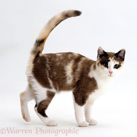sx - (Bilder, Warrior Cats)