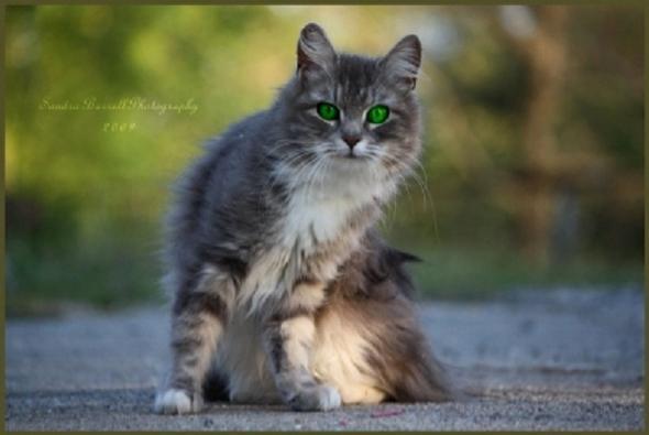 dc - (Bilder, Warrior Cats)