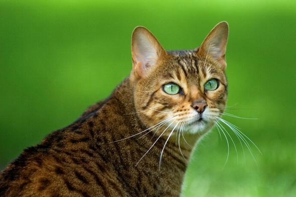 fv - (Bilder, Warrior Cats)