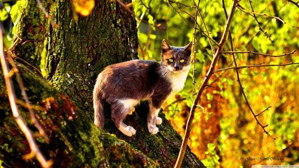 gb - (Bilder, Warrior Cats)