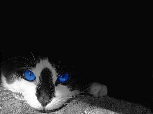 hn - (Bilder, Warrior Cats)