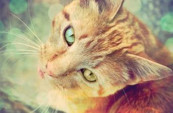 jm - (Bilder, Warrior Cats)