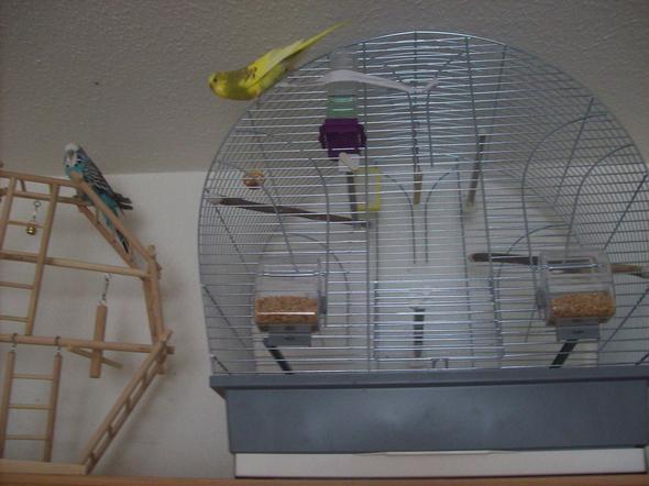 Gibt  es eine  Badewanne  für  den inneren Bereich  im Käfig? - (Tiere, Haustiere, Pflege)