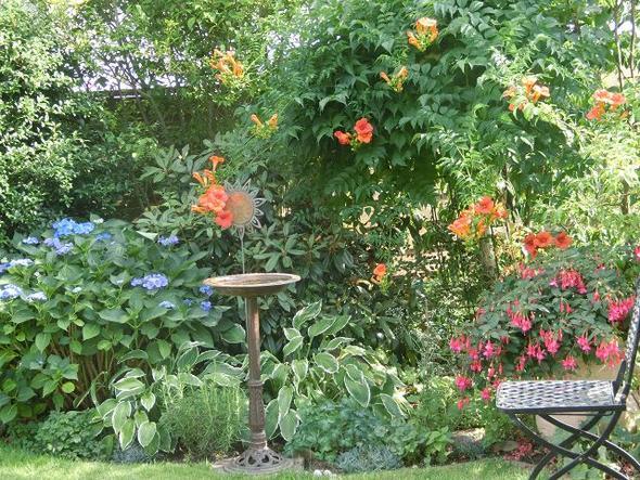 Campsis nach Rückschnitt im Frühjahr - (Garten, Pflanzen, Pflanzenpflege)