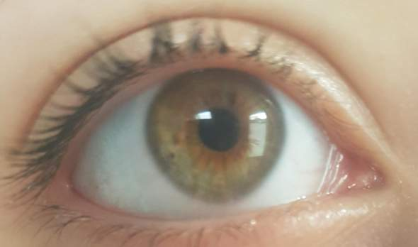 Haselnuss Augen