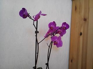 Meine Pflanze - (Pflanzen, Blumen, absetzen)