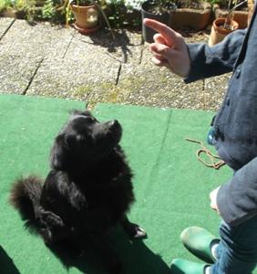 Mein Hund!  (ungefähr) Sechs Jahre (2010 geboren laut Tierheim)? - (Hund, Geburtstag)