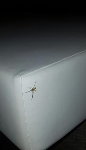 Welche Spinne ? - (Tiere, Spinne)