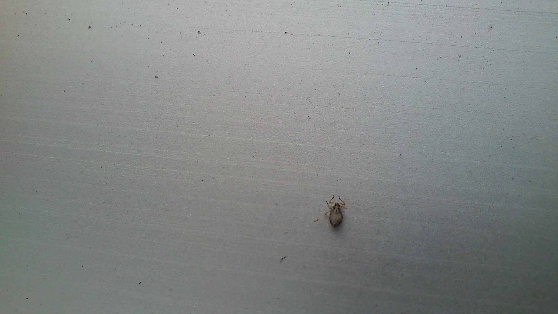 tieren auf dem balkon insekten plage. Black Bedroom Furniture Sets. Home Design Ideas