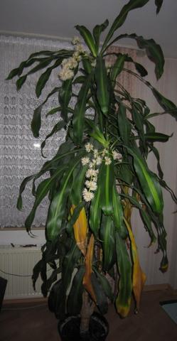 Pflanze Stirbt Nach Blüte