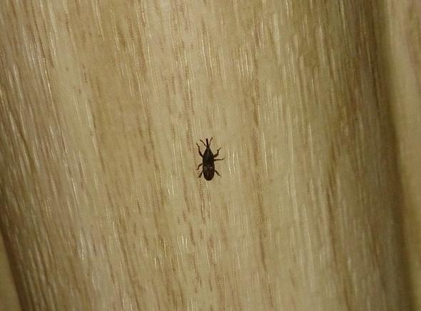 ** Was Für Ein Käfer Ist Das? ** (Schädlinge, Insekten