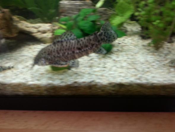 Bild1 - (Fische, Aquarium)