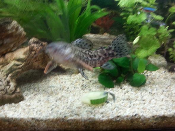 Bild2 - (Fische, Aquarium)