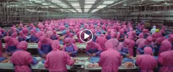 Bild aus Video - (Film, Video)