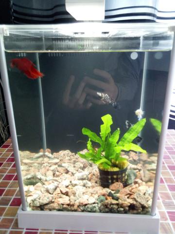 - (Fische, Aquarium, atmen)