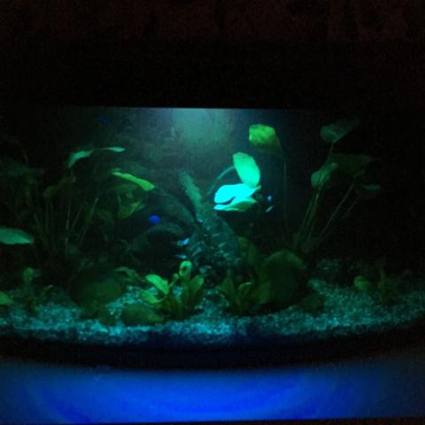 Extra Nachtbeleuchtung für Fische - (Fische, Aquarium, Nachtbeleuchtung)