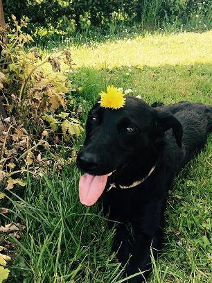 Dackel-Labrador-Windhund - (Hund, Fütterung, forelle)