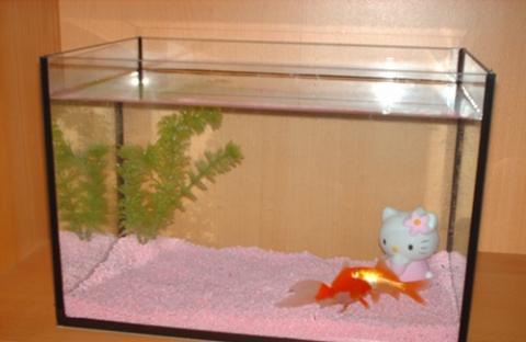 Das Aquarium - (Haustiere, Aquaristik, Tierschutz)