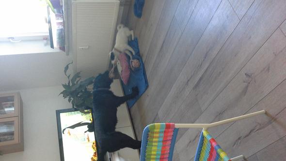 meine zwei - (Tiere, Hund, Welpen)