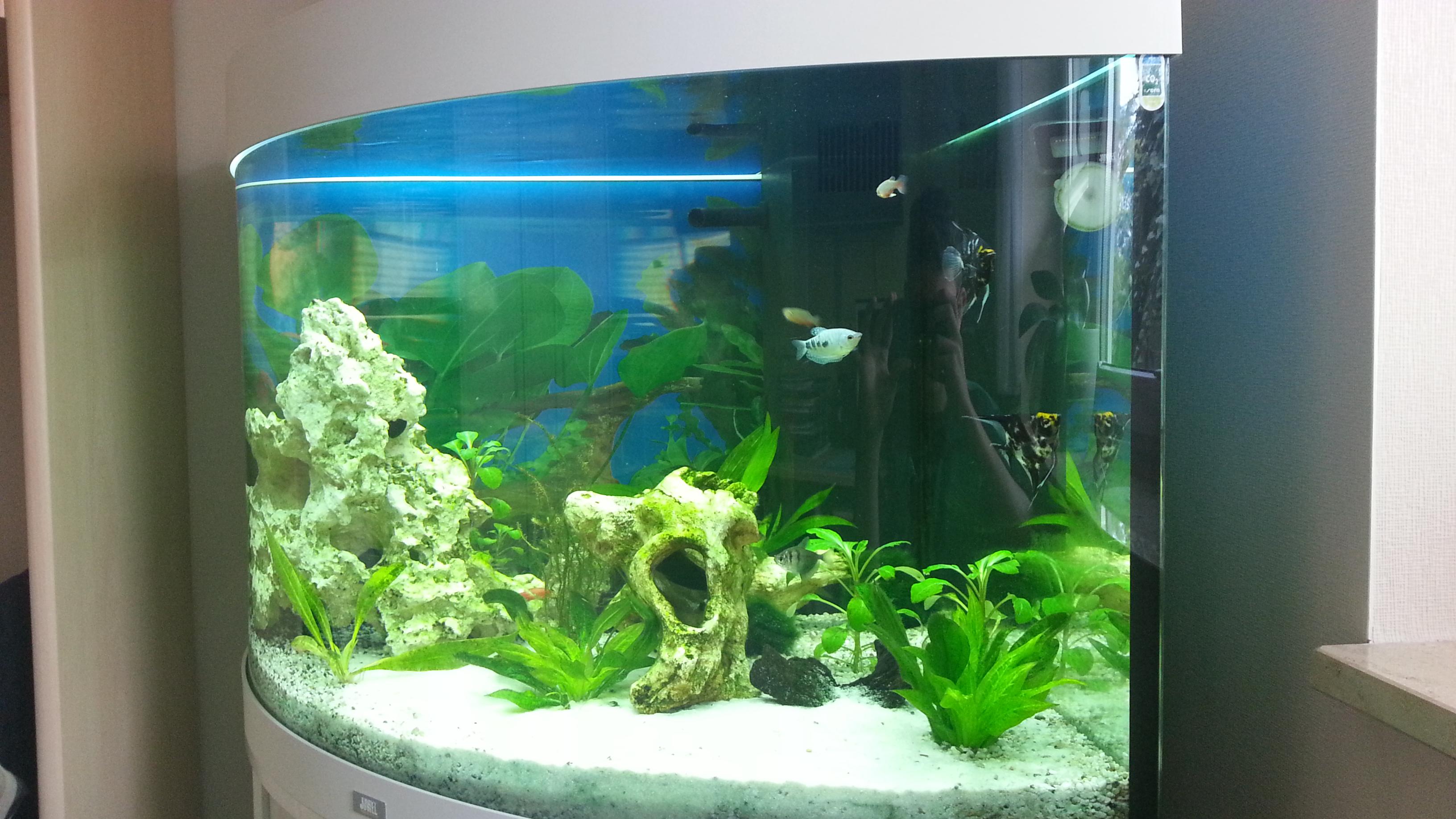 190 liter besatz wasser fische aquarium for Aquarium fische