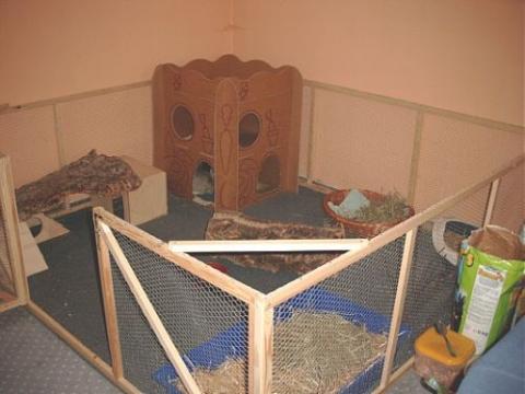 2 5 bis 3 5 jahre alte kaninchen noch f r innenhaltung. Black Bedroom Furniture Sets. Home Design Ideas