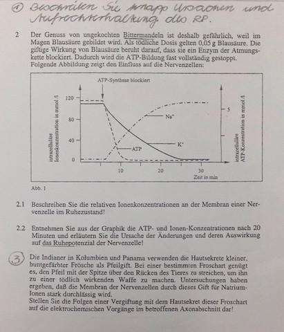 2) Membranpotential, Ruhepotential, Nervenzelle? (Biologie ...