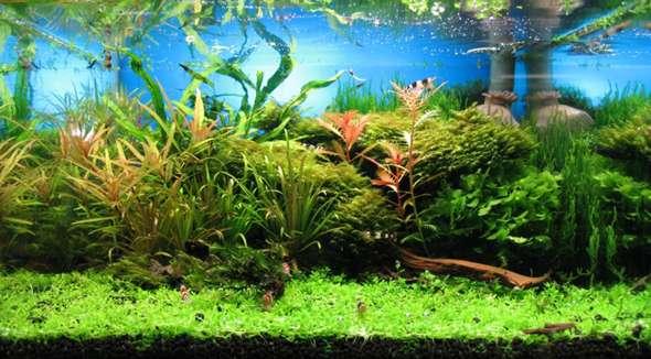 200l Aquarium wie bepflanzen?