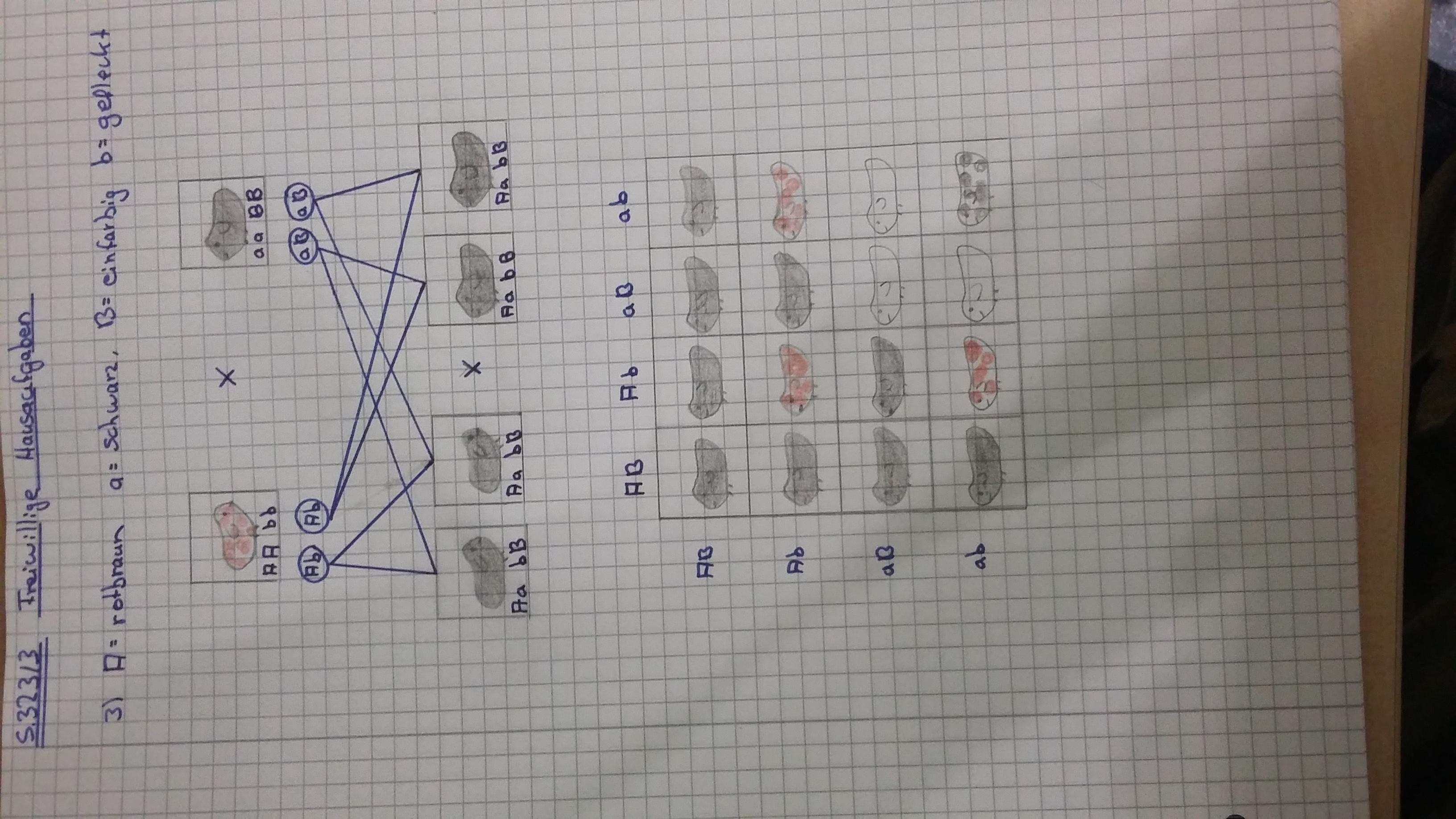3. Mendel\'sche Regel Vererbung, Korrektur? (Biologie, Mendelsche)