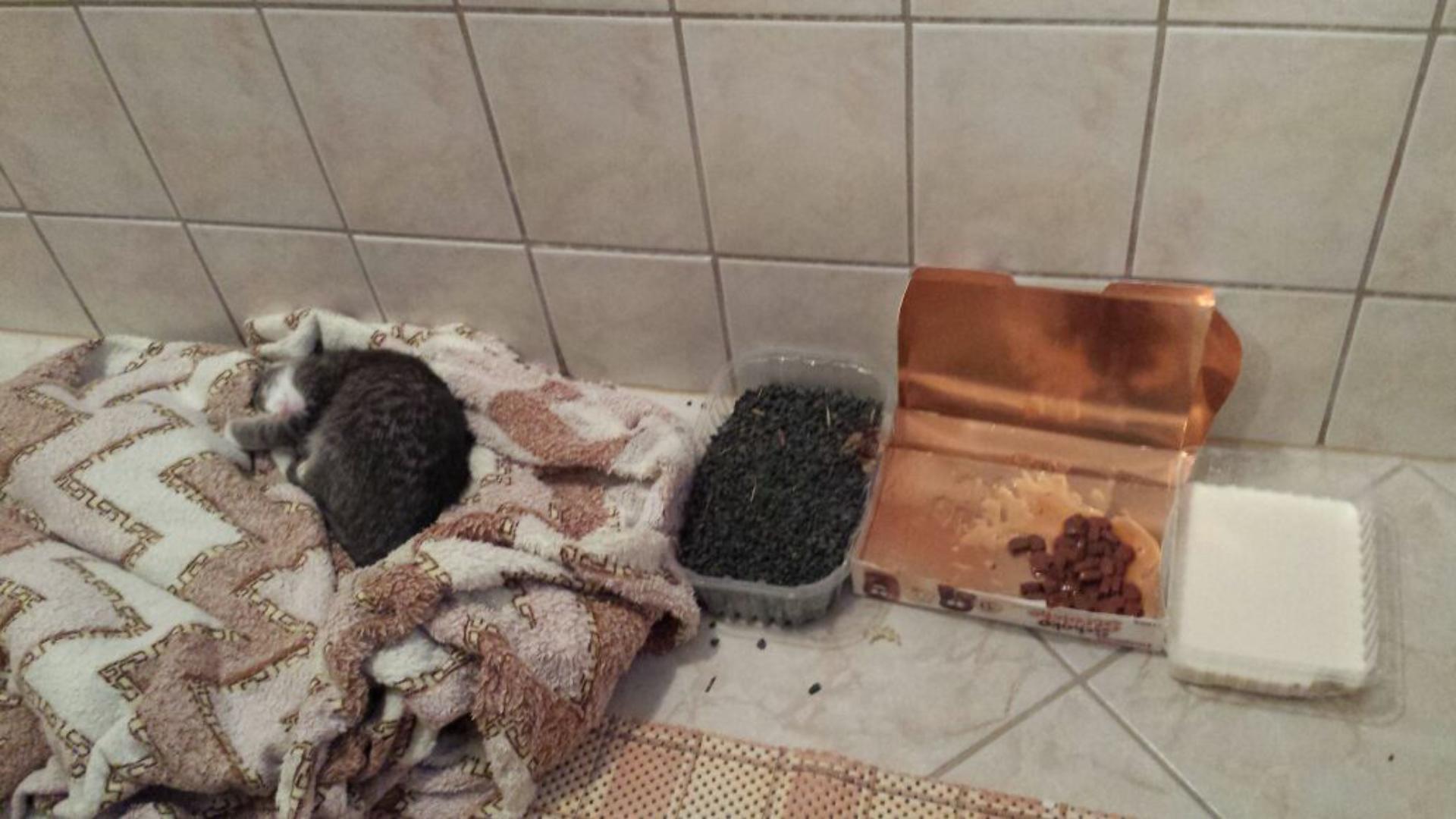 3 wochen junge katze aufziehen auf was achten tiere. Black Bedroom Furniture Sets. Home Design Ideas
