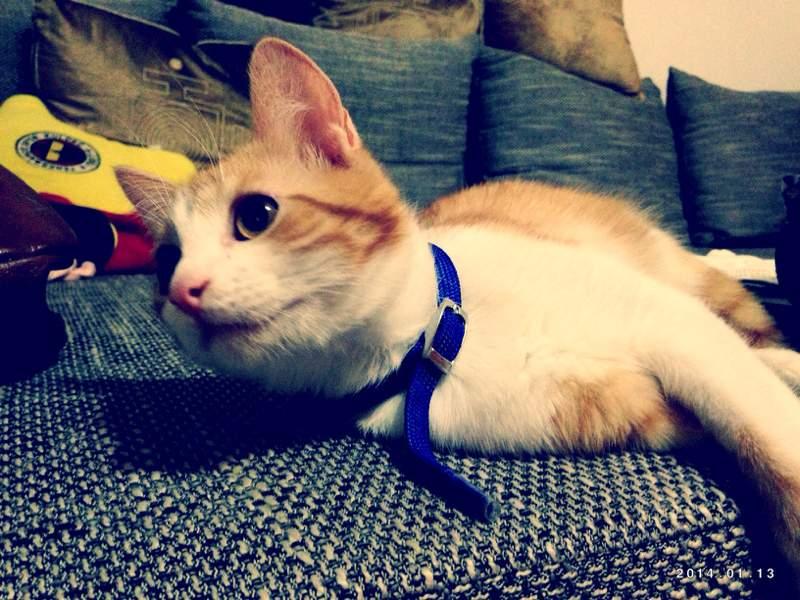 Katze hat Angst vom Staubsauger und ist zu faul zum