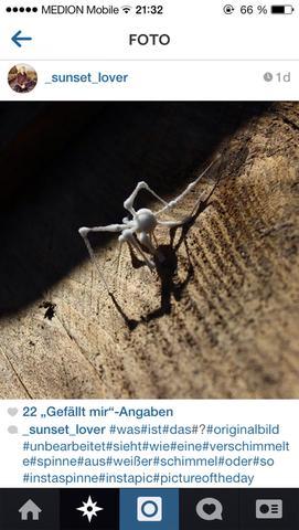 Das ist die spinne sie hat auch weisse bollen an den gelenken - (Tiere, Haus, Natur)