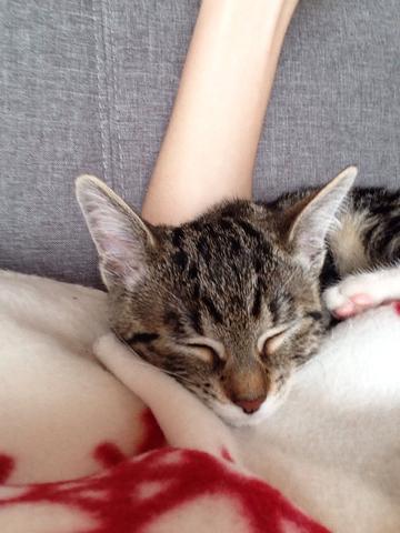 Bild 2 - (Tiere, Katze, Haustiere)