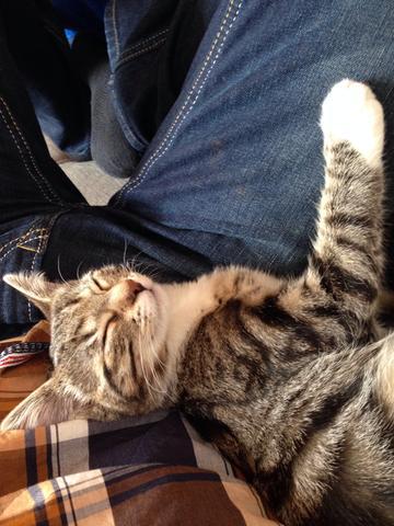 Bild 4 - (Tiere, Katze, Haustiere)