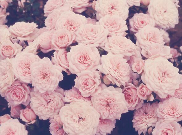 Suche Eine Schöne Handy Hülle Mit Blumenmuster Für Das Iphone 5s