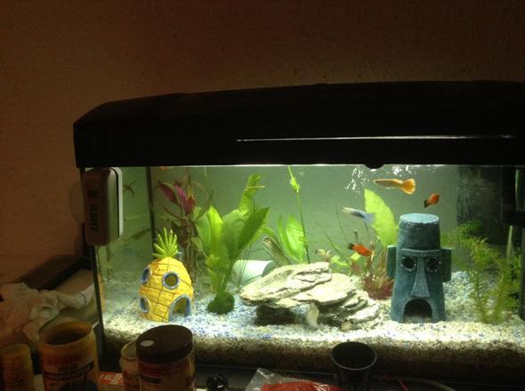 Das ist das Aquarium  - (Tiere, Haustiere, Fische)
