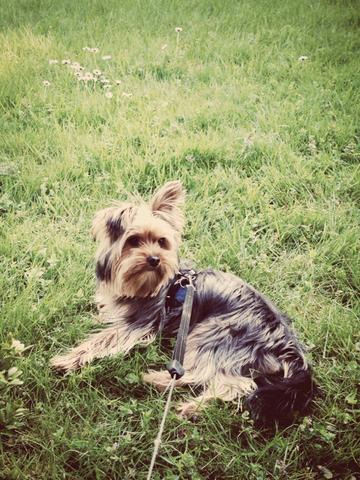 Jack  - (Hund, Flugzeug)