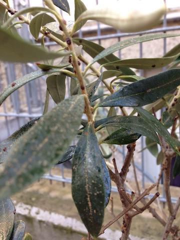 Bild 2  - (Schädlinge, Zimmerpflanzen, Läuse)