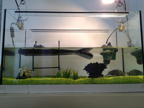 Aquarium  - (Tiere, Haustiere, Pflanzen)