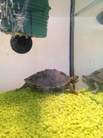 Schildkröte - (Tiere, Haustiere, Pflanzen)