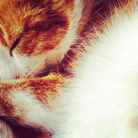 Süss, boris, freak, bekloppt, ein und alles - (Tiere, Katzen)