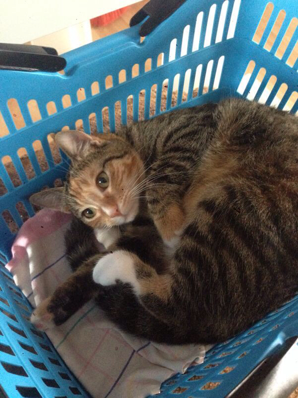 Katze Ist Erkältet Wie Kann Ich Ihr Helfen