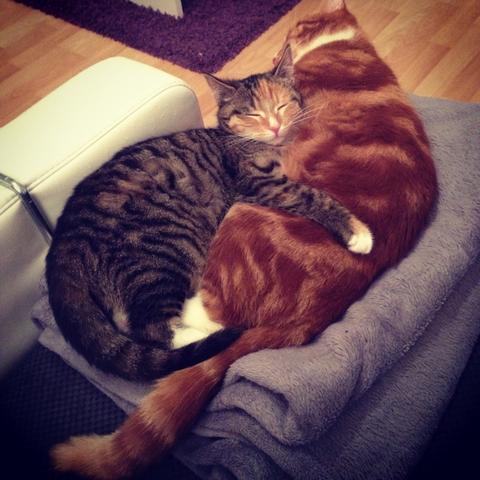 Mila und Mittens. - (Katzen, Wasser, Napf)