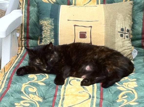 Hier ist das Foto meiner Katze - (Schule, Musik, Liebe)