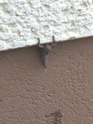 Insekt1 - (Tiere, Insekten, stachel)