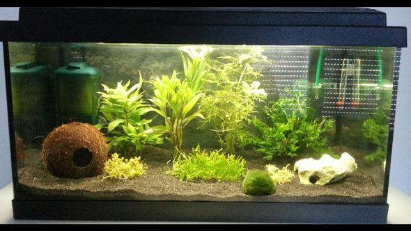 54l aquarium besatz tipps fische aquaristik. Black Bedroom Furniture Sets. Home Design Ideas