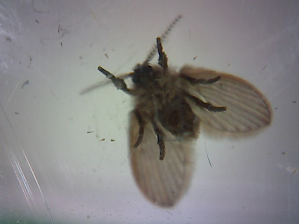 Insekt von unten - (Tiere, Insekten)