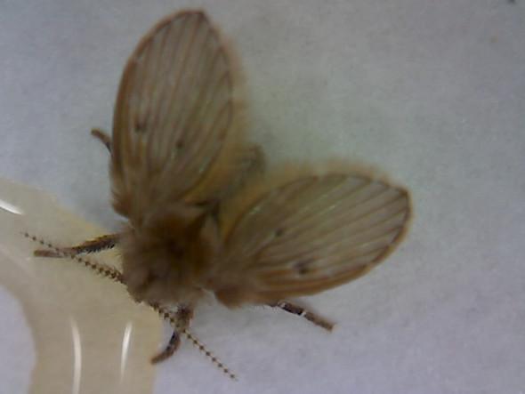 Insekt von oben - (Tiere, Insekten)