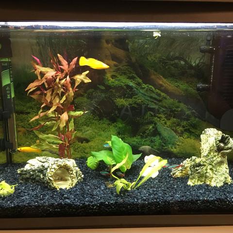 Sind das genug pflanzen oder soll ich noch 3-4 Pflanzen holen??? - (Fische, Aquarium, Molly)
