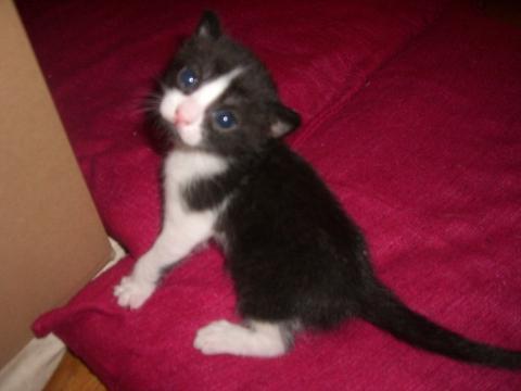 ab wann essen babykatzen selbstst ndig katzen babykatze. Black Bedroom Furniture Sets. Home Design Ideas