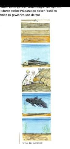 Ablauf vom Fossil?